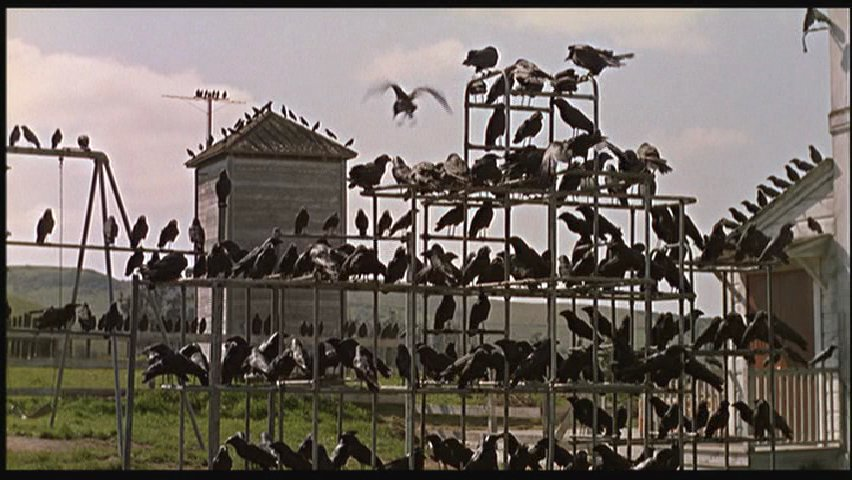 "Blackbirds in Alfred Hitchcock's ""Birds"""